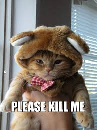 Please Kill Me Meme - please kill me kill me cat quickmeme
