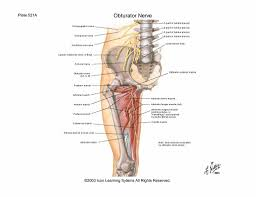 Knee Compartments Anatomy Scientia Thigh And Leg Lecture Notes