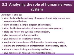 What Is A Reflex Action Example Coordination U0026 Response Part 1 The Nervous System