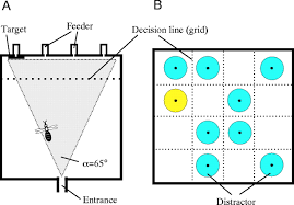 do honeybees detect colour targets using serial or parallel visual
