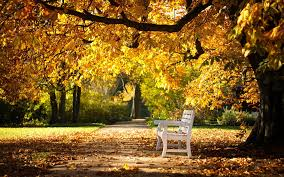 Benches In Park - bench wallpapers 31640 2560x1600 px hdwallsource com