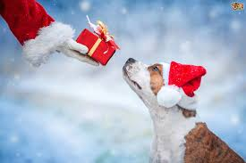 dog christmas a dog is for not just for christmas lincoln kennels and