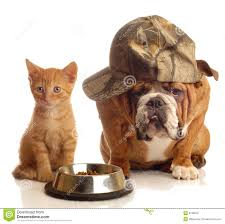 dog and cat at food dish stock photography image 6739812