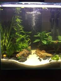 Fluval Edge Aquascape The 17 Best Images About Gökhan Fluval Edge On Pinterest
