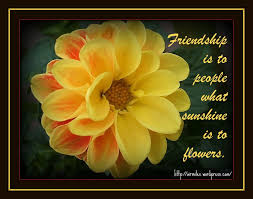 Flowers And Friends - conversation between finalflicker member 1009118 and dmac