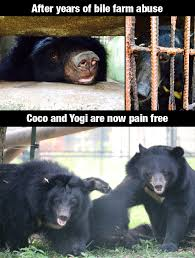 Patient Bear Meme - bear in the picture coco and yogi together through thick and thin