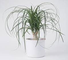 houseplants that don u0027t need much water hard to kill houseplants
