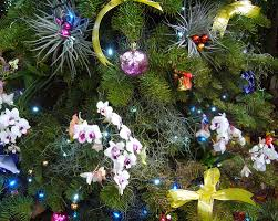 Christmas Decorations Online Singapore by Christmas Greetings From Singapore Botanic Gardens Evelyn Lim