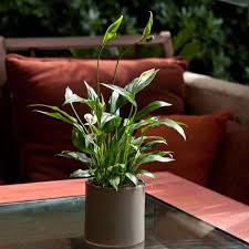 15 house plants for urban dwellers brit co