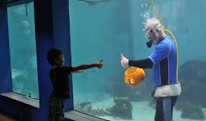 aquarium halloween mote president carves pumpkin underwater to prepare for mote u0027s