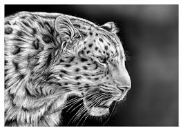 how to draw realistic cheetah tiger step by step easy for