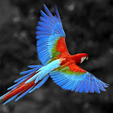 bird wallpapers bird wallpapers bird s photos for your lockscreen on the app store