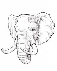 realistic elephant drawing top 10 elephant tattoo designs tattoo