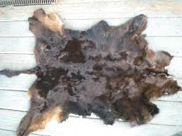 Bison Hide Rug Tanned Hides And Furs