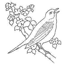 download bird animal coloring pages