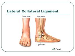 Lateral Collateral Ligament Ankle Lower Leg And Ankle Injuries Shin Splints Medial Anterior Ppt