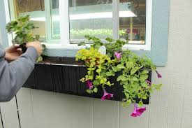 100 plants for bathrooms with no window 7 window treatment