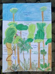 the daintree rainforest u2013 capucine u2013 les carnets de route d