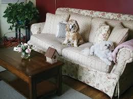 house dogs amazon com dogtek sonic bird house bark control outdoor indoor