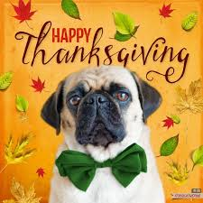 2737 best pugs images on pugs pug and autumn