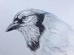 bird art u2013 create art every day