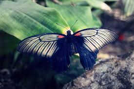 butterfly free stock images by libreshot