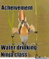 Funny Bird Memes - thirsty bird bird funny animal and memes
