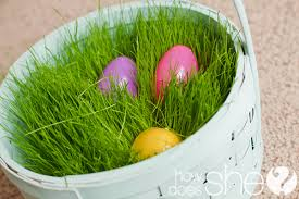 easter basket grass grow your own easter basket grass
