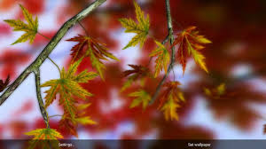autumn leaves in hd gyro 3d xl parallax wallpaper android apps