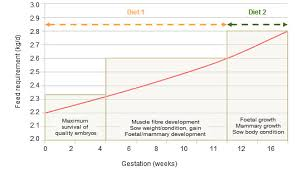 Sow Gestation Table Swine Nutrition Phase Feeding Of Sows In Gestation Pig333 Pig
