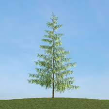 thin tree 3d model cgtrader