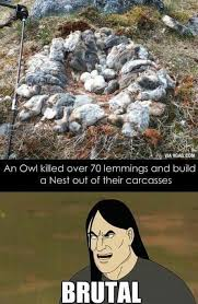 Damn Nature You Scary Meme - 21 best nature is scary images on pinterest ha ha funny stuff