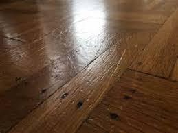 why do dogs scratch hardwood floors carpet vidalondon