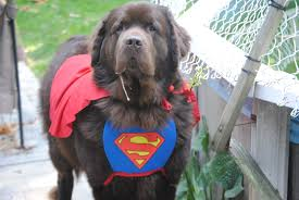 pet halloween contests that are spooktacular mybrownnewfies com