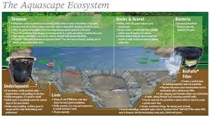 Aquascape Biofalls Blogs Pond Designs U0026 Landscape Ideas In Rochester Ny Acorn Ponds