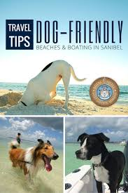 73 best dog friendly beach vacations images on pinterest beach