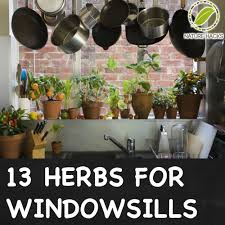 Window Sill Herb Garden Designs Windowsill Herb Garden Ideas
