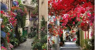 beautiful spring of the most beautiful spring alleys from around the world