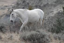 North Dakota wildlife images Free photo wild horse mare medora free image on pixabay 1305739 jpg