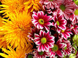 free flowers flowers pictures free