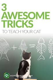 216 best cat tips images on pinterest pet care cat stuff and cats