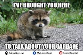 Raccoon Excellent Meme - best excellent raccoon meme raccoon memes kayak wallpaper