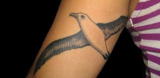 albatross tattoos tatuajes tatouages