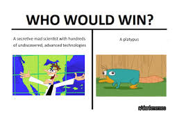 Platypus Meme - perry is woke dankmemes