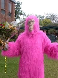 happy birthday telegrams pink gorilla singing telegrams
