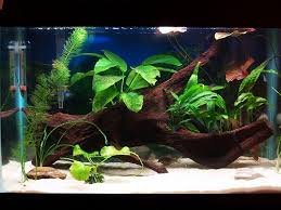 diy aquarium decorations home design tips creativehomedesigning