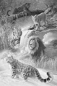 snow tiger coloring page lion tiger puma leopard jaguar coloring pages colouring adult
