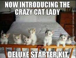 Crazy Cat Memes - crazy cat lady deluxe starter kit fun cat pictures