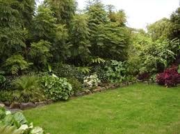 Backyard Privacy Trees Garden Privacy Fence Evergreen Plants Shrubs Fir Trees Privacy