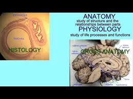 Anatomy And Physiology Definitions Anatomy U0026 Physiology Definitions Youtube